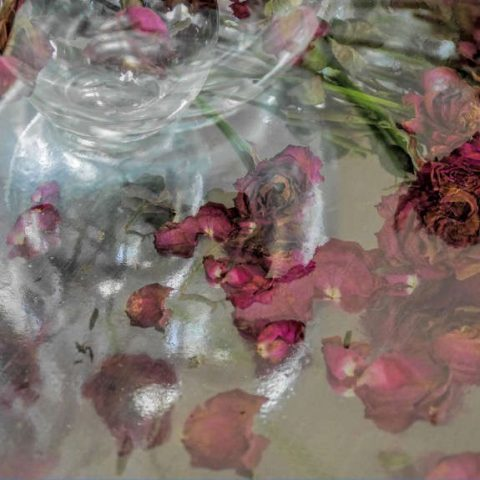 Roses by Tessa Mills FRPS